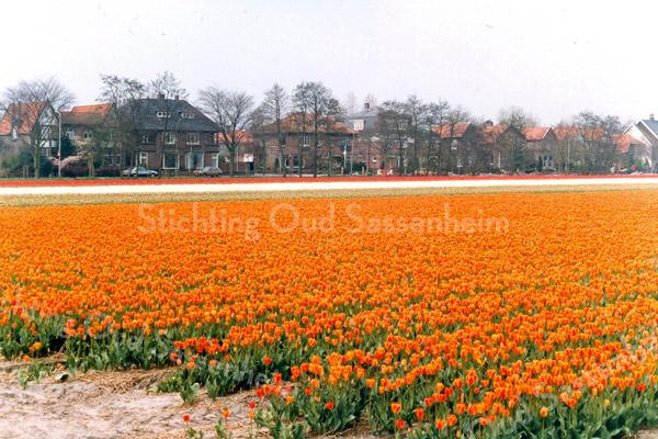 F2865<br /> Bollenveld met tulpen. De huizen op de achtergrond staan aan de Teijlingerlaan.