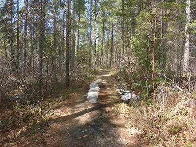 Allison Gregor - algonquin3-trail1