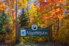 Welcome To Algonquin (#0397)