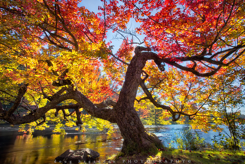 Autumn At The River (#0342)