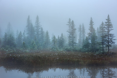 Morning Fog (#0215)