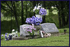 From a cemetery on the far north side of Eaton, OH<br /> (2004-05-24 0351 Cemetery North of Eaton OH )