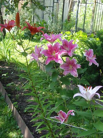 2009-08-13...2009-10-19, Plants