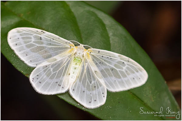 White moth at the waterfall