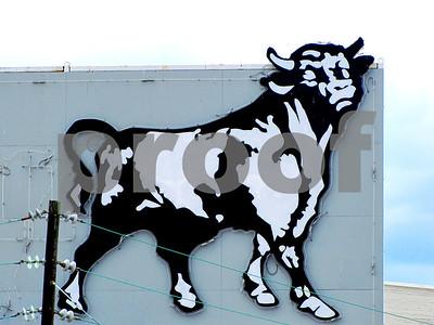 IMG_5658 Neon Bull BRT V2