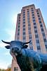 P1260297 Major the Bull w Hill Bldg-Ti
