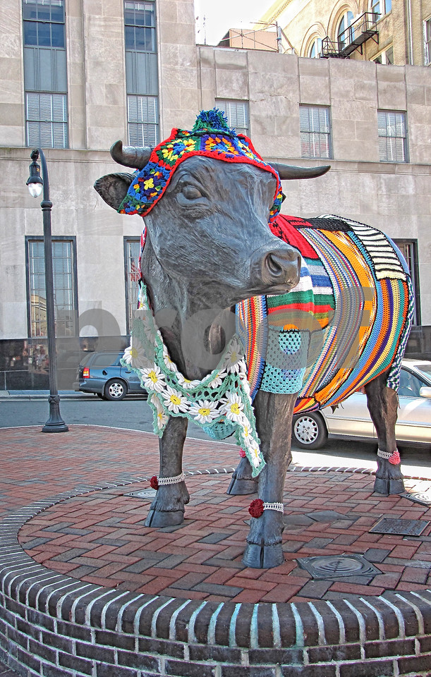Major, the Bull Dressed Up