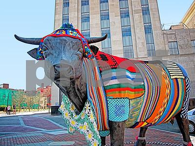 Major the Bull 3