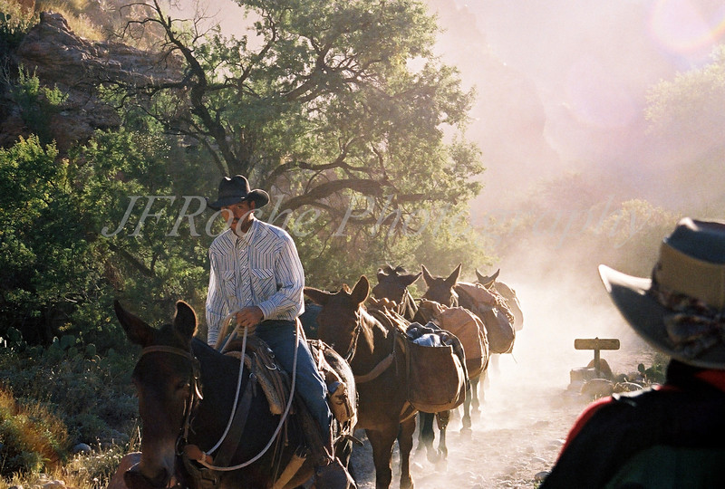 Dave. Mule wrangler, Grand Canyon, Arizona.