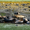 Seals! Taken near Yes Bay Lodge in SE Alaska. Photo taken with an Olympus E-500 DSLR with a 70-300 Zoom Lens.