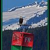 Eagle - Auk Bay, Juneau Alaska