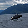 IMG_1093Rev1 - Guy - Killer Whale