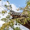 Kyoto_102119_147
