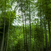 Kyoto_102019_97