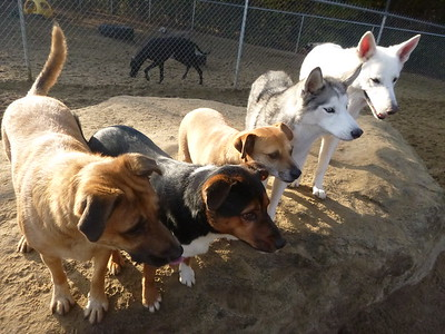All Dogs Gym 11-2-2016