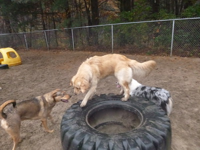 All Dogs Gym 11-3-2016
