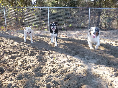 All Dogs Gym 11/22/2016