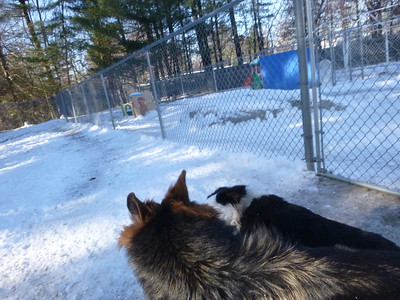 All Dogs Gym 12/13/2016