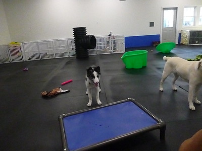 All Dogs Gym 1/31/2017