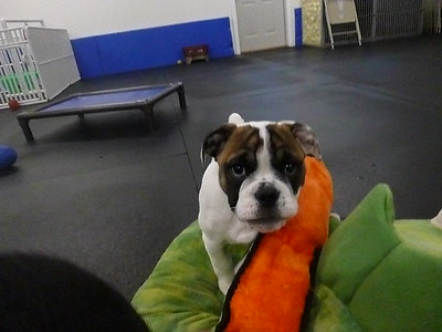 All Dogs Gym 2/17/2017
