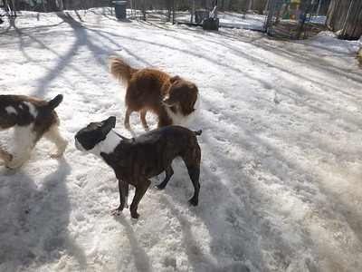 All Dogs Gym 2/24/2017