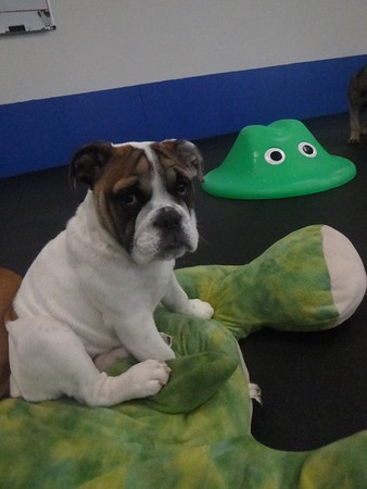 All Dogs Gym 3/16/2017