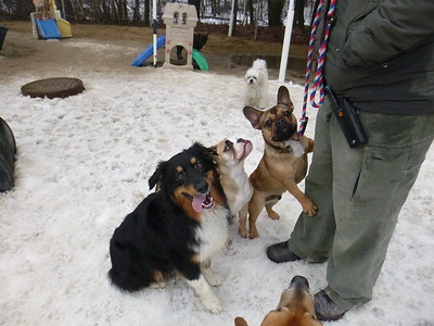 All Dogs Gym 3/29/2017