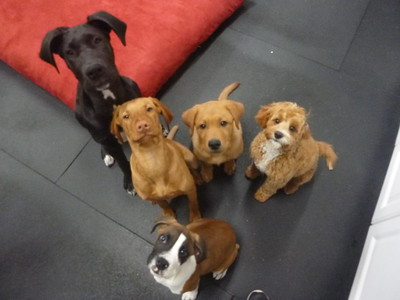 All Dogs Gym 4/21/2017