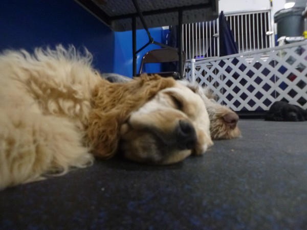 All Dogs Gym 7/18/2016