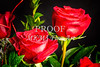 Red Rose Buds Closeup Wall Art 1803.14