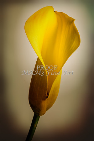 Yellow Lily Flower 6001.02