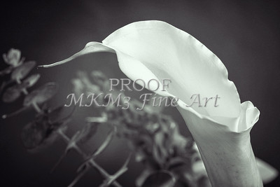 Black and White Lily Flower 8008.01