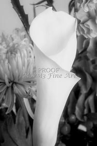 Pictures of Flower Arrangements Fine Art Photograph Prints 3835.02
