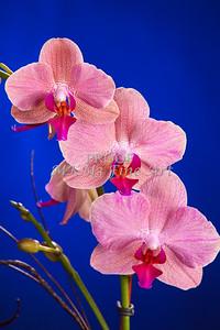 Pictures of Flower Arrangements Fine Art Photograph Prints