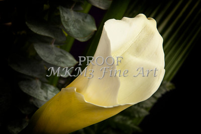 Pictures of Flower Arrangements Fine Art Photograph Prints 3843.02