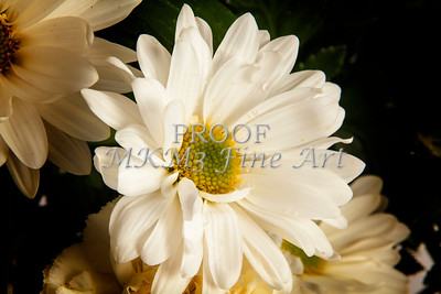 Pictures of Flower Arrangements Fine Art Photograph Prints 3837.02