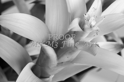 Pictures of Flower Arrangements Fine Art Photograph Prints 3829.02