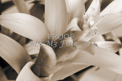 Pictures of Flower Arrangements Fine Art Photograph Prints 3830.02