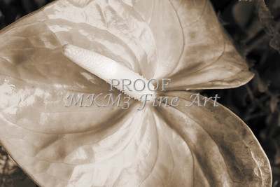 Pictures of Flower Arrangements Fine Art Photograph Prints 3833.02