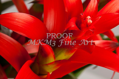 Pictures of Flower Arrangements Fine Art Photograph Prints 3828.02