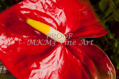Pictures of Flower Arrangements Fine Art Photograph Prints 3831.02