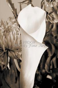 Pictures of Flower Arrangements Fine Art Photograph Prints 3836.02