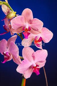 Pictures of Flower Arrangements Fine Art Photograph Prints 3842.02