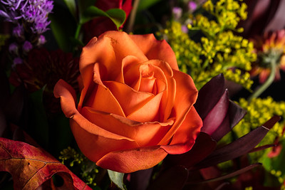 10.1957 Orange Rose Art Photograph