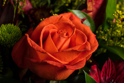 03.1957 Orange Rose Art Photograph