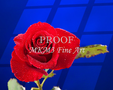 Blue Window and Red Rose PIcture 27