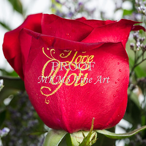 Red Rose Wall Art 1805.13