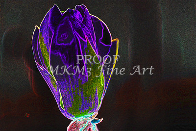 Tulip Tree Dark Drawing Wall Art 1806.809