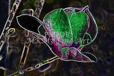 Tulip Tree Dark Drawing Flower Image 1806.805