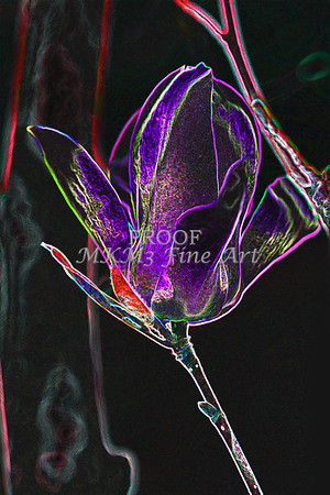 Tulip Tree Dark Flora Drawing 1806.813